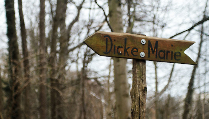 Dicke Marie – Visiting the Oldest Tree in Berlin