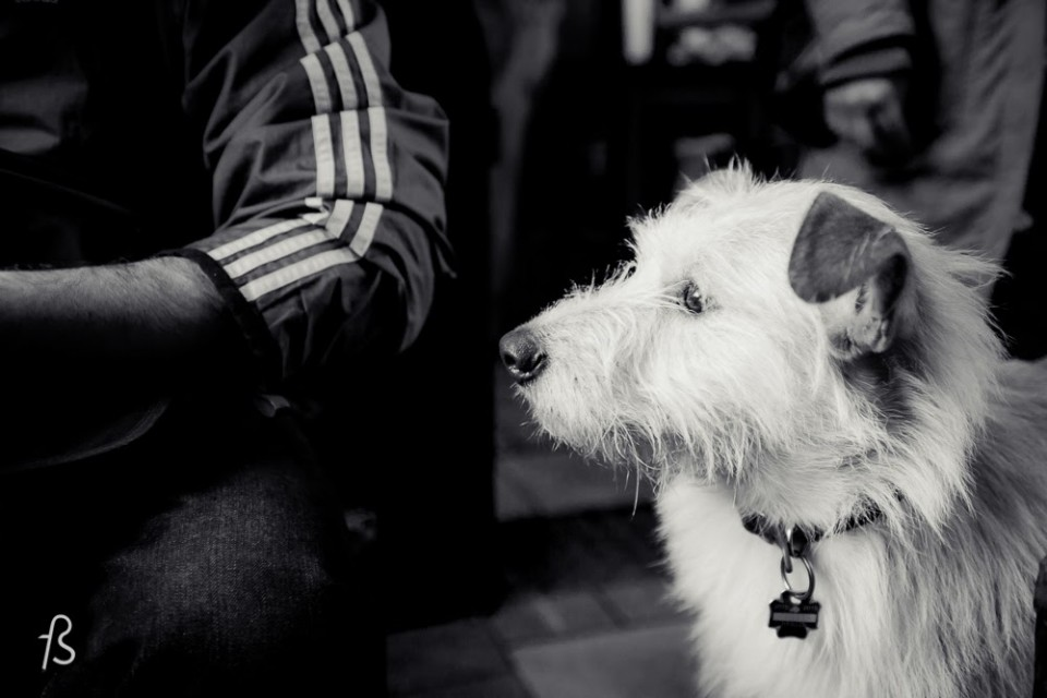 Dogs in Berlin: What do you need to know?