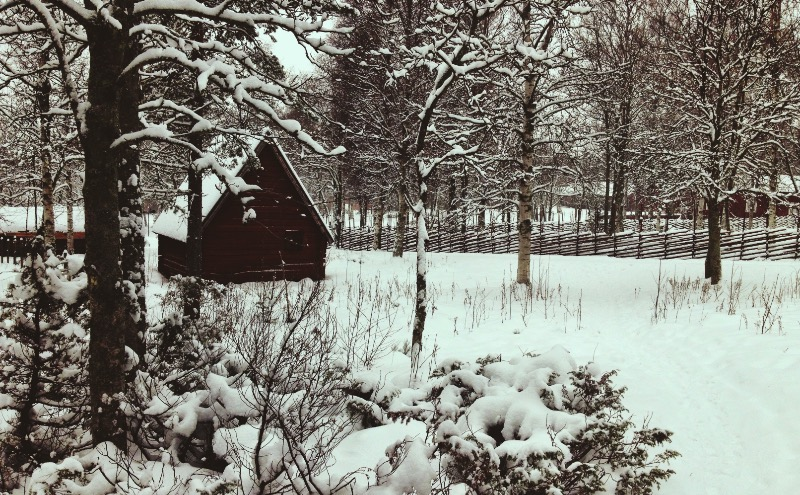 Sami People: What we learned about them in Umeå