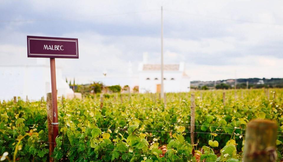 Terre di San Vito: a Wine paradise in Italy