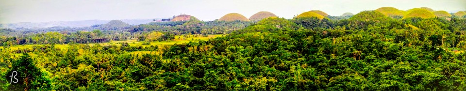 Chocolate Hills and the cute overload of Bohol, the Tarsier
