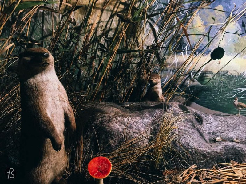 If you enjoy the Finnish nature as much as we do, you will love Turku Biological Museum. This small museum is filled with dioramas that show dozens of Finnish animais in their natural environments. Or as close to their natural environments as we can have inside a museum like this one.