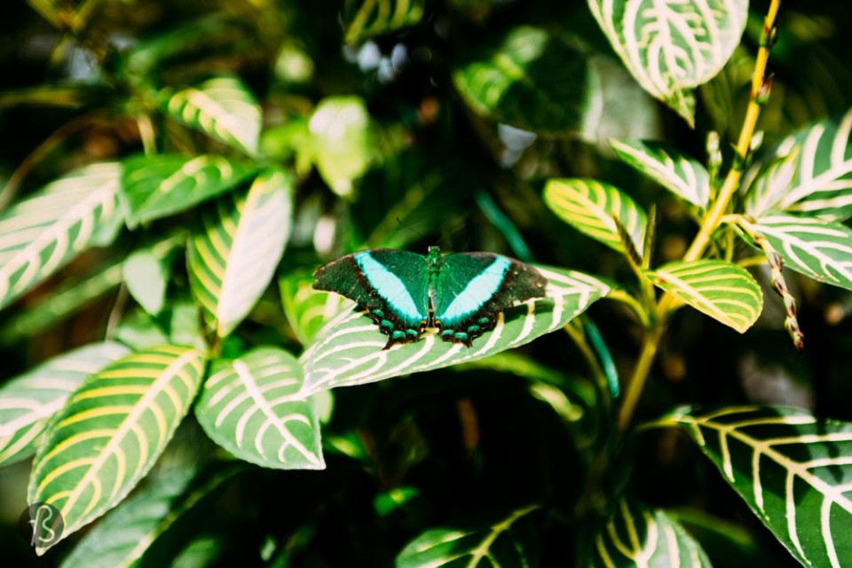 This goes for everybody crazy about colors and new experiences. The Simply Butterflies Conservation Center is a butterfly sanctuary with over 300 different species. You can even let them land in your hand, if you're lucky enough! It is magical!