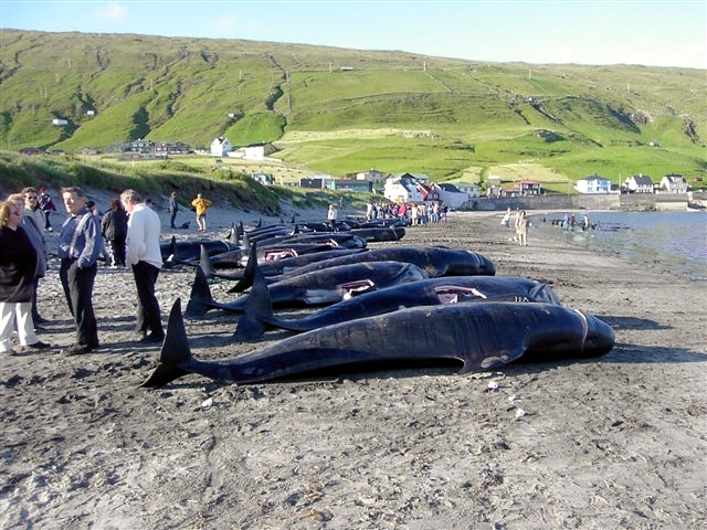 whale hunting Photo credit: Erik Christensen