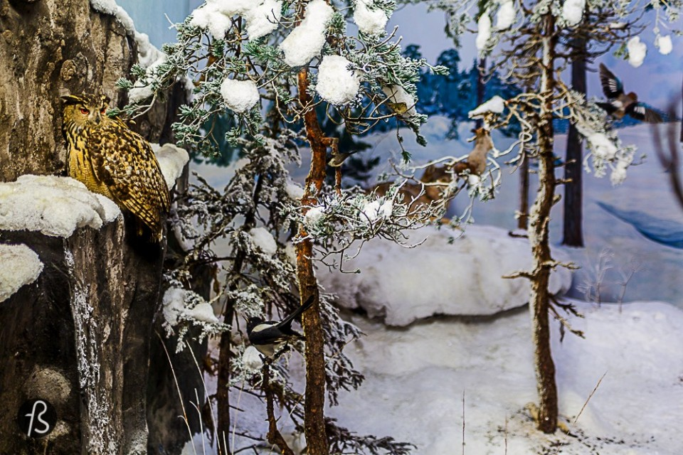 Visit the Biological Museum With over 2000 species of butterflies and other insects, countless mammals and birds and fishes in display, the Biologial Museum in Turku is a great choice for a cold or rainy day. It is, like most things in Turku, walking distance from the city center and fun for everybody including families and young travelers.