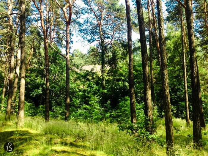 On a really warm summer day a couple of years ago, I decided to take my camera to Oranienburg just to see if I was right and that weird dot in the middle of a forest was really a bunker. I was there before when I found my way into the SS Bakery and I knew that there was more hidden in the woods around it. Too bad the bunker wasn't in a good shape.