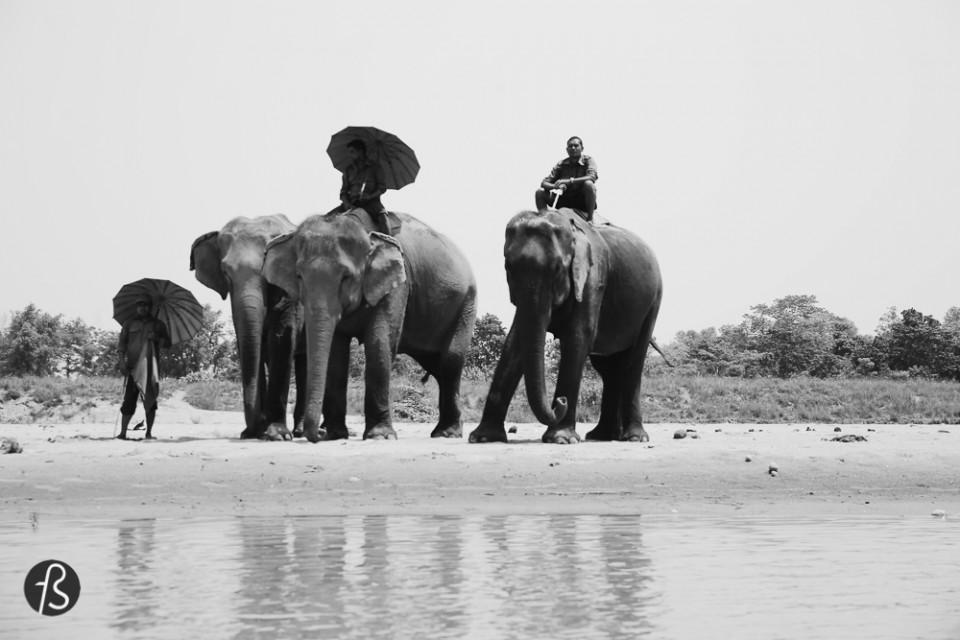 Marcela Fae - safari in nepal - Fotostrasse -592946851