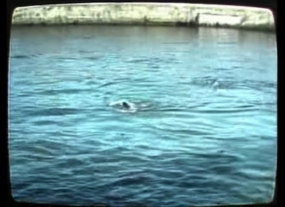 It was August 21, 1988, and four people decided to risk their lives crossing the Spree River in an attempt of escaping East Germany in hope for freedom in West Berlin. Three men and a woman risked their lives and watching it today make everything look like a distant event in the past, but that was Berlin at the time.