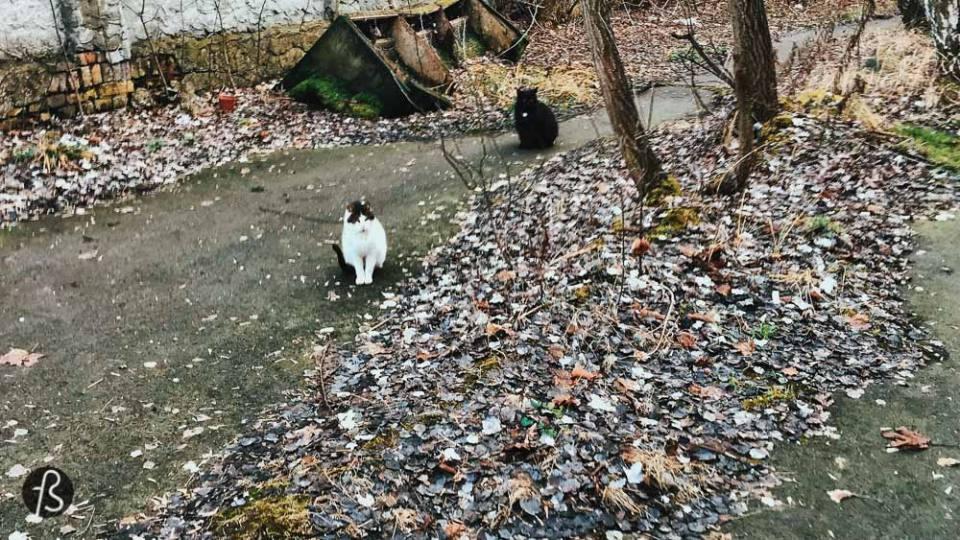 urban exploration with cats in guben brandenburg berlin