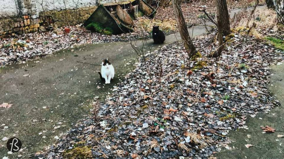 urban exploration with cats in guben brandenburg berlin