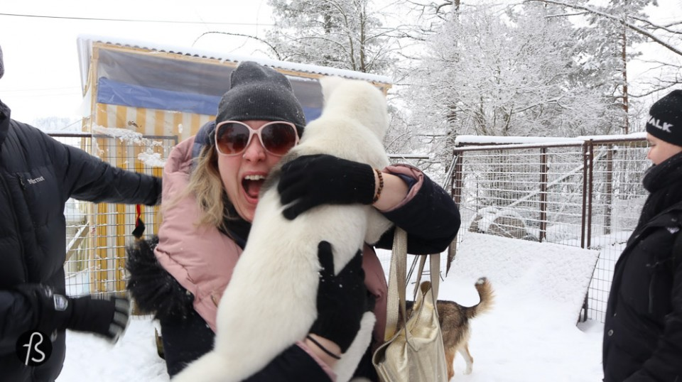 Marcela Fae - Fotostrasse - dog sledding in finland -0262