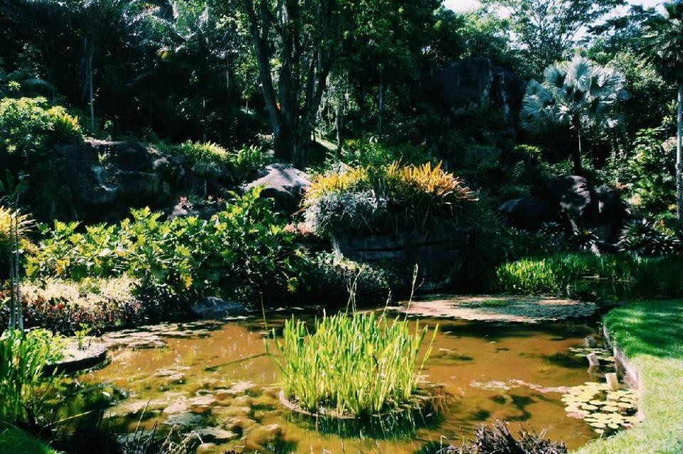 Burle Marx garden in rio de janeiro
