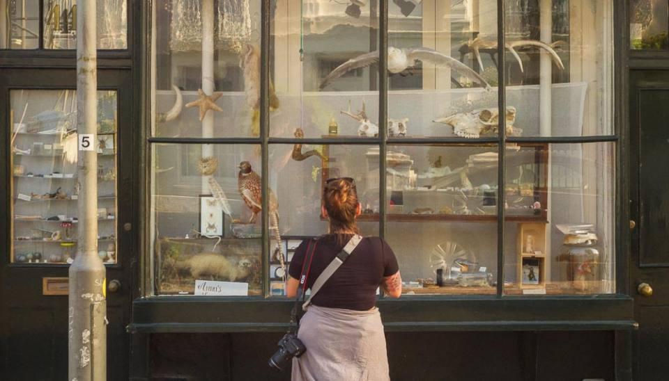 Anna's Museum in Brighton