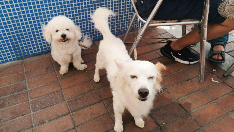 Dogs in gran canaria