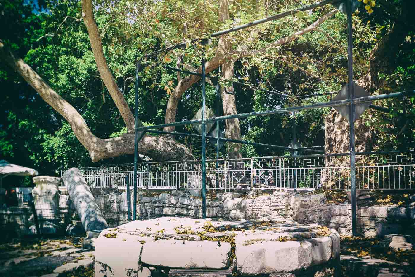 The Plane Tree of Hippocrates in Kos